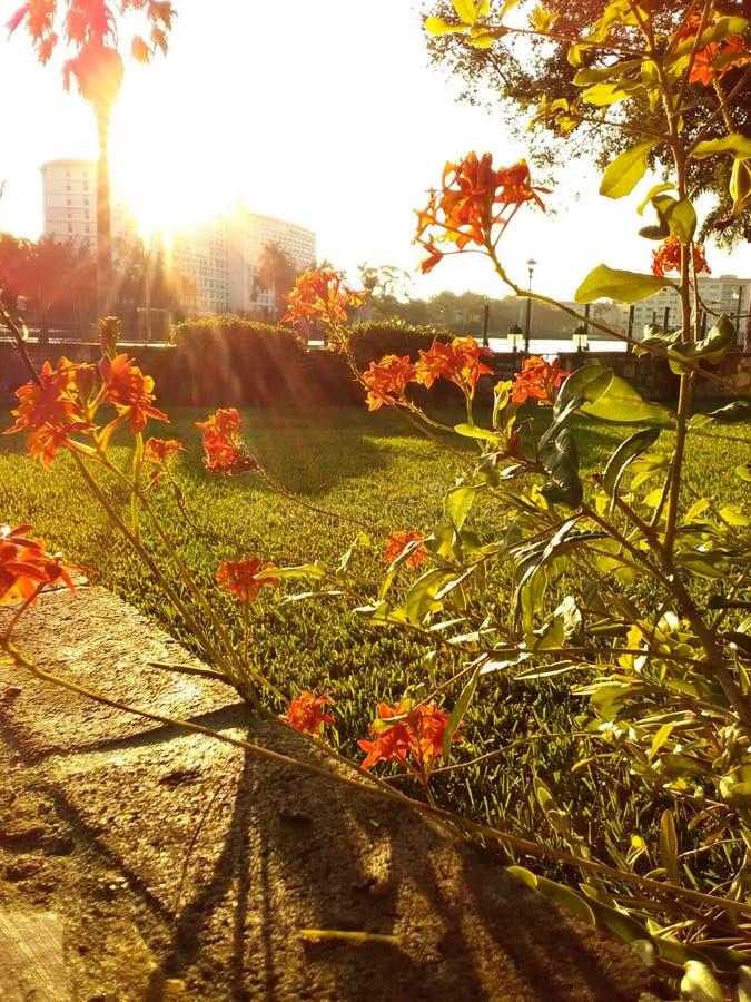 Blüte des Morgens Sun lizenzfreies stockfoto