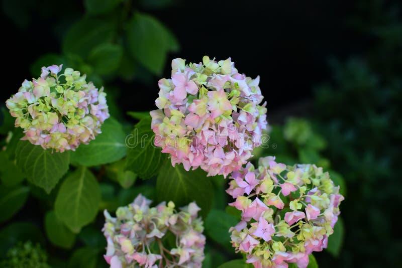Blüte im Mai stockfoto