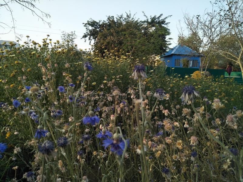 Blüte und lebendiges stockfotografie