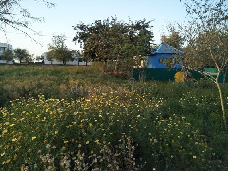 Blüte und lebendiges lizenzfreie stockfotos