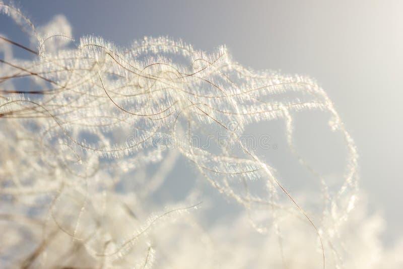 Blüte versieht nah - oben auf Himmelhintergrund-Weichzeichnungsabstraktion mit Federn lizenzfreie stockfotografie