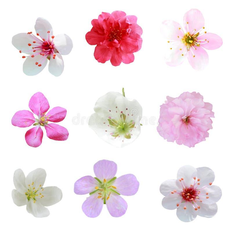 Blüten-Ansammlung lizenzfreies stockbild