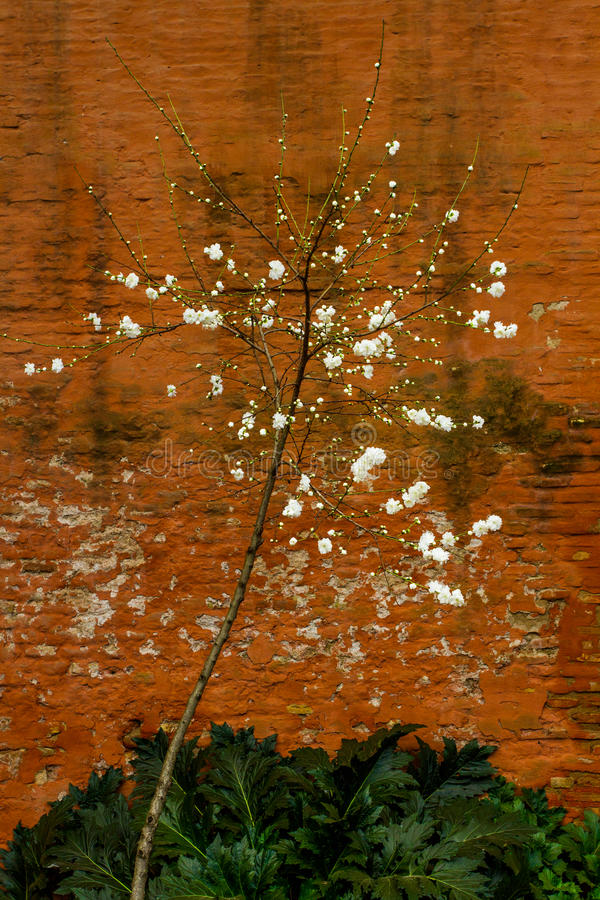 Blüten-Baum lizenzfreies stockfoto