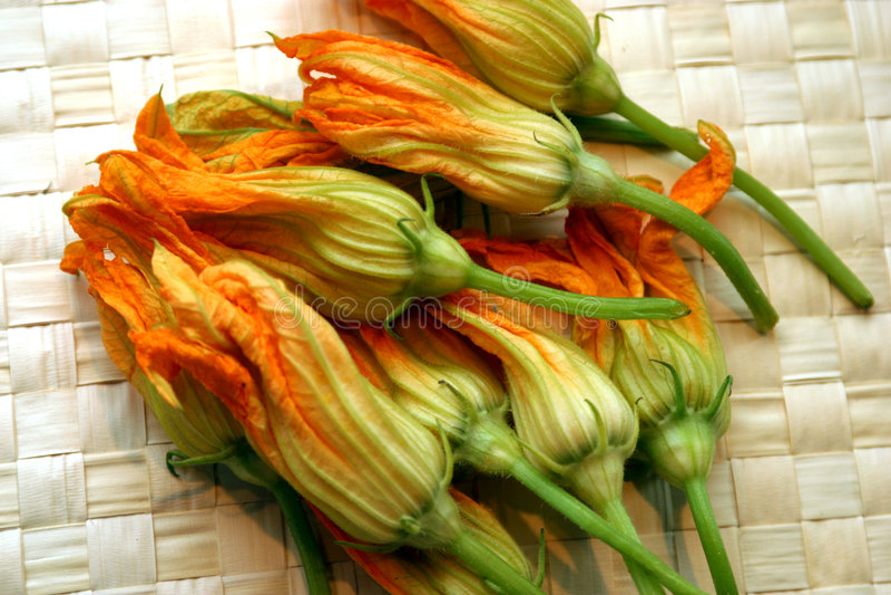 Blüten des orange Kürbisses stockfotografie