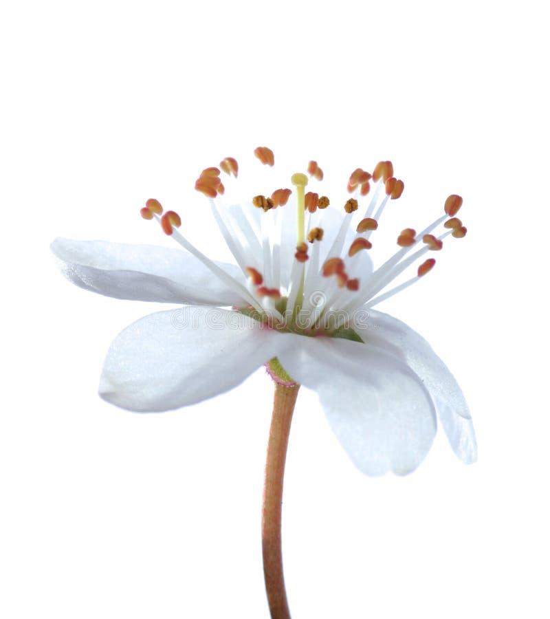 Blüten am frühen Frühling stockfoto
