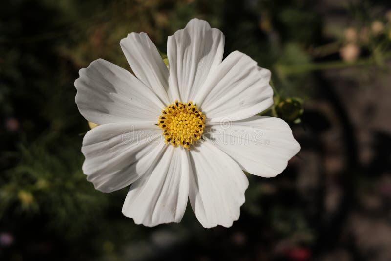 Blüten-nahes hohes stockbild