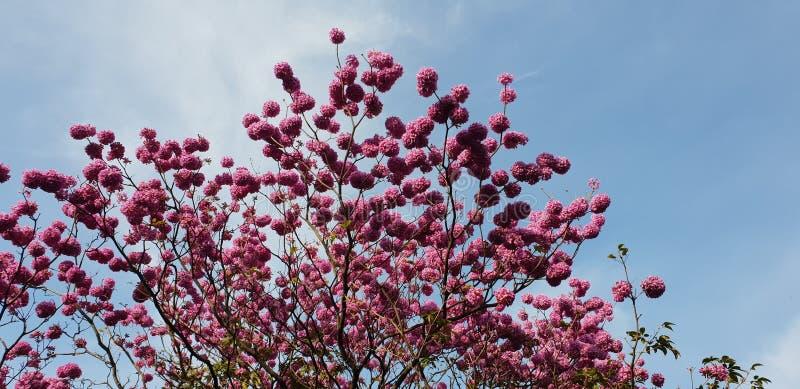 Blüten sind nature& x27; s-Segen stockfotografie
