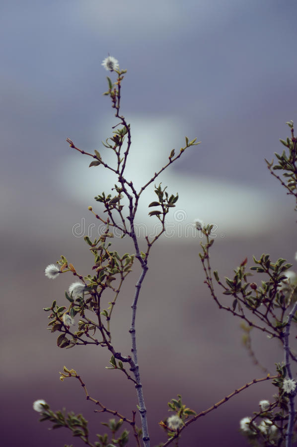 Blütenniederlassung stockbild