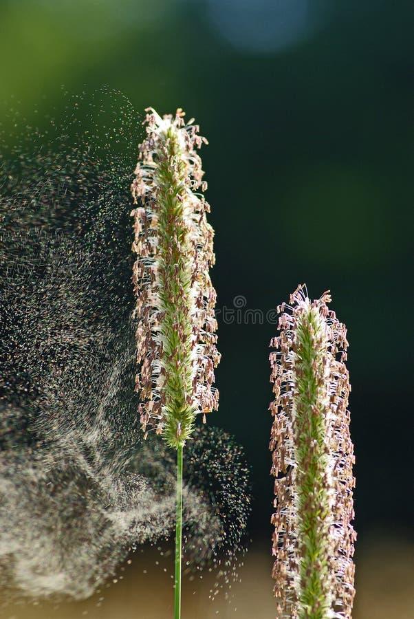 Download Blütenstaub-Flug stockbild. Bild von hintergrund, brise - 5659917