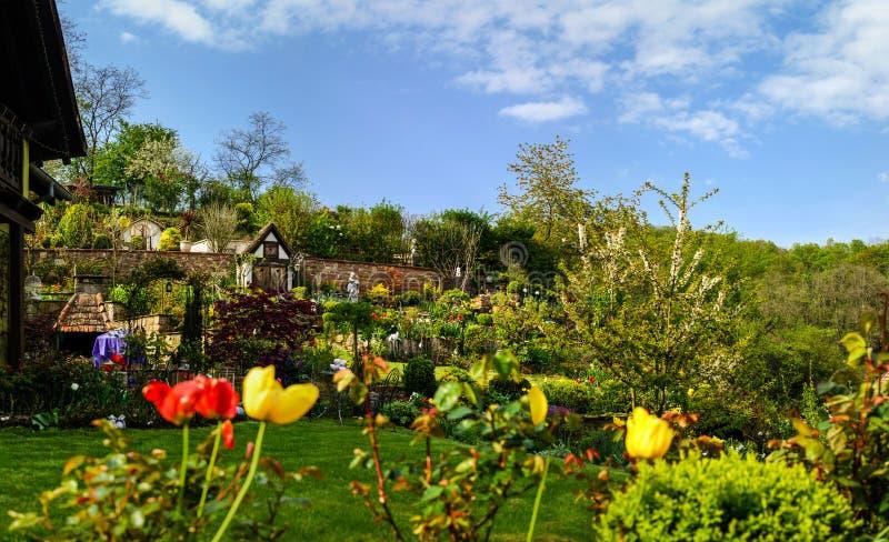 Blütentulpen im Garten, Frühlingszeit stockfotos