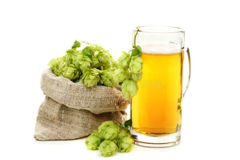 Blütenzapfen des Hopfens und Glas Bier. stockfotos