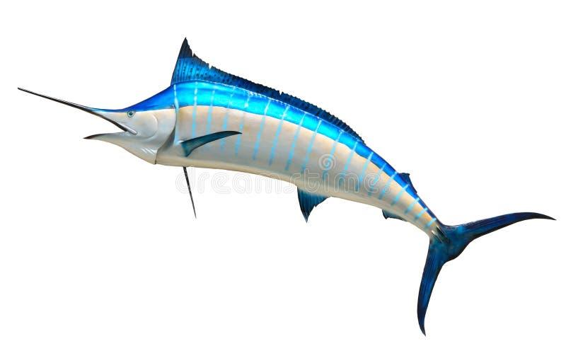 blå fiskmarlin arkivfoto