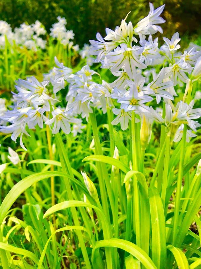 bl? blommagreen f?r bakgrund royaltyfri fotografi