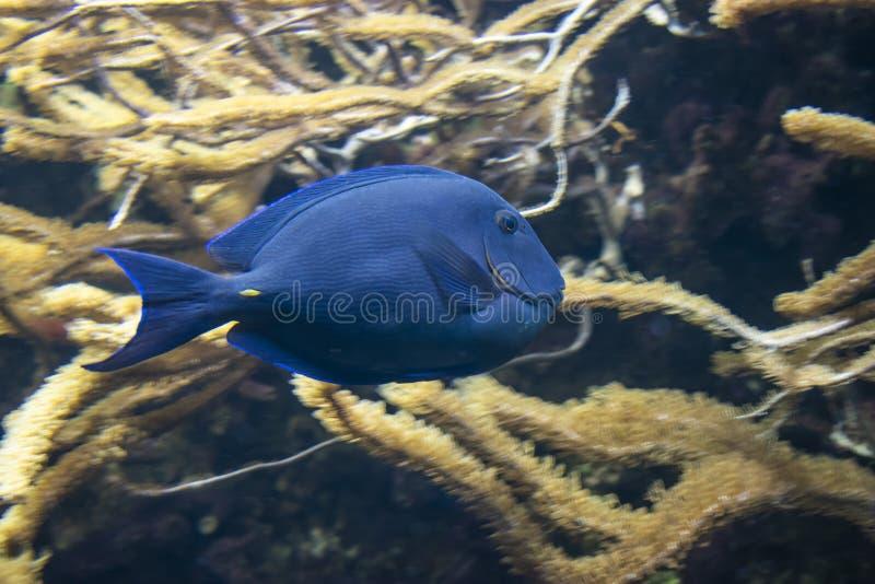 bl? fisk royaltyfri fotografi