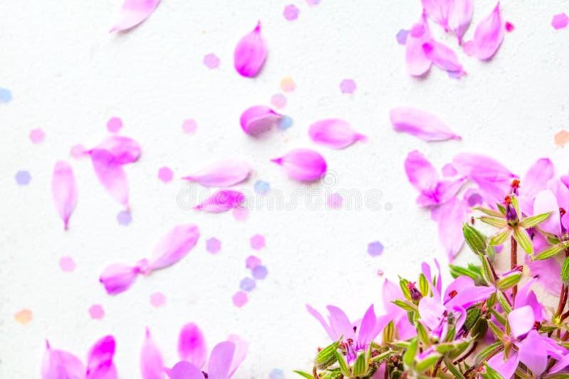 Bl?hen rosa Blumen auf wei?em Pastellhintergrund stockfotografie