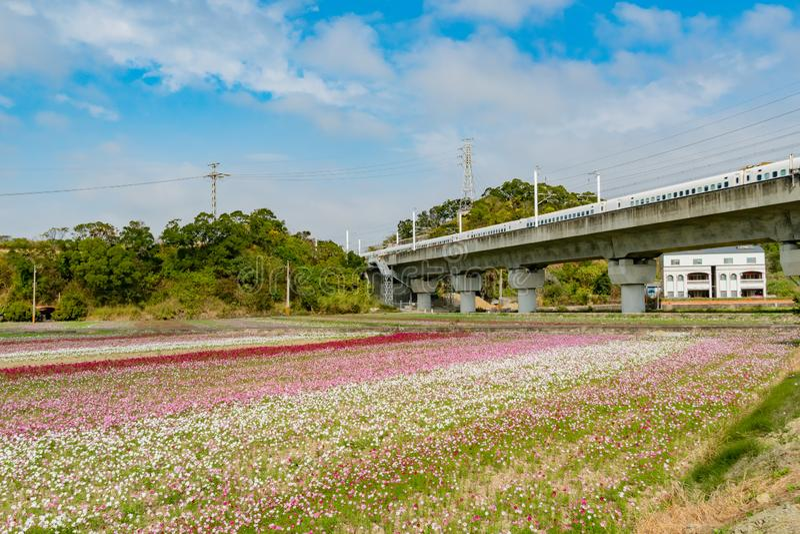 Bl?te der wilden Blume unter der Shanjiao-Ausblickspur lizenzfreie stockfotografie