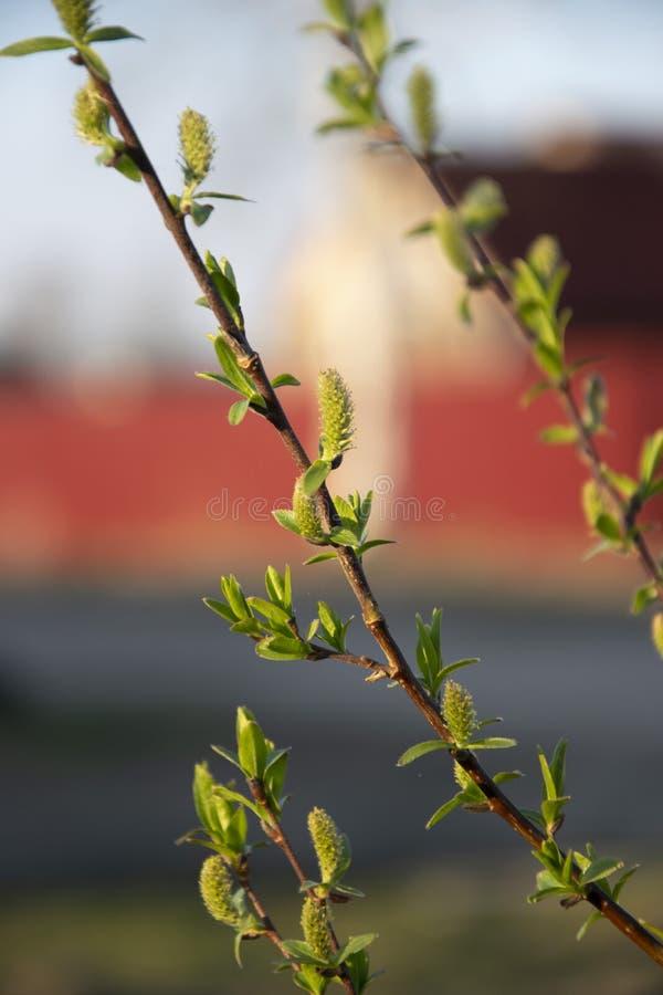 Bl?tenpflanzen sind ein Symbol des neuen Lebens lizenzfreie stockfotografie