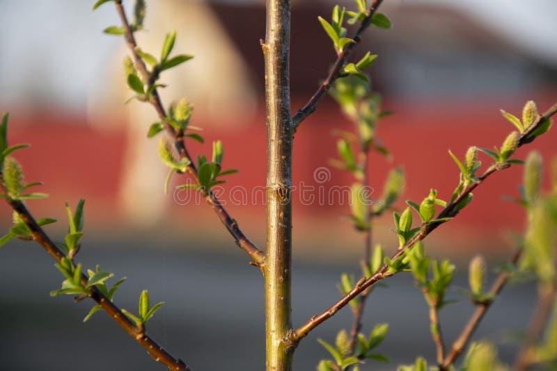 Bl?tenpflanzen sind ein Symbol des neuen Lebens lizenzfreies stockbild