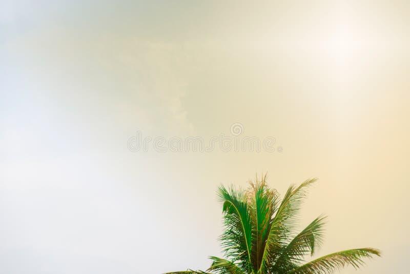 Bl?tter des Kokosnussbaums auf Hintergrund des blauen Himmels lizenzfreies stockbild