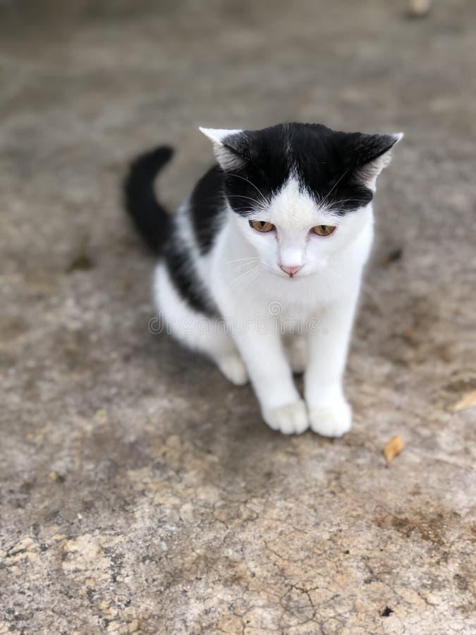 Black'n witte kat stock foto's