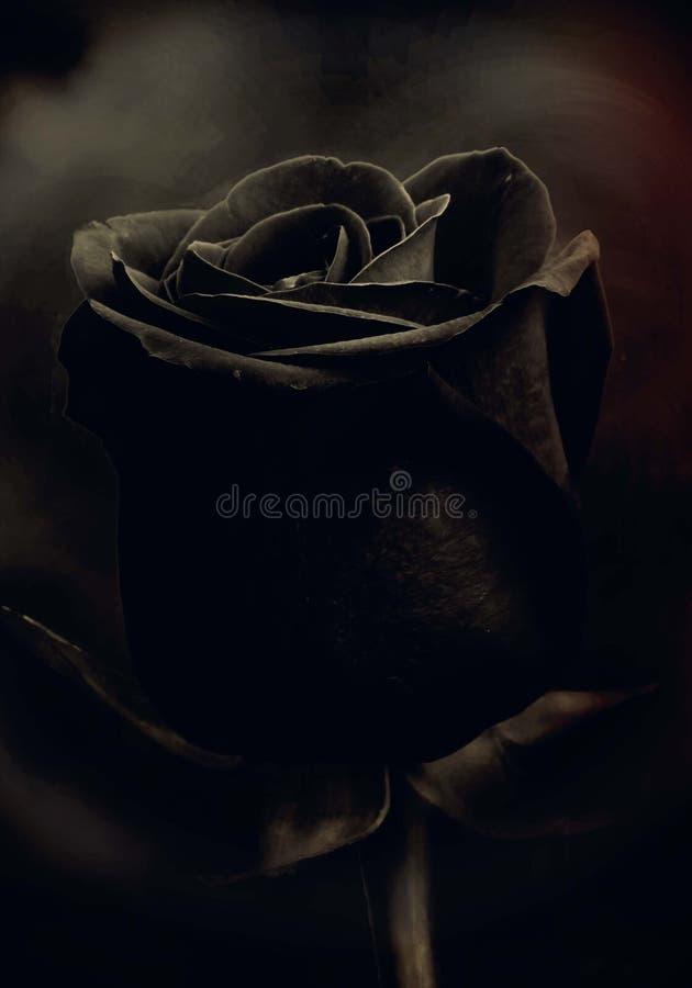 Black free picture single rose eleletsitz: Single