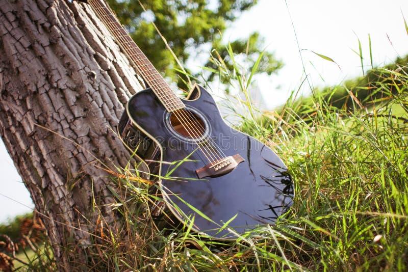 Black Acoustic Cutaway Guitar On Tree Free Public Domain Cc0 Image