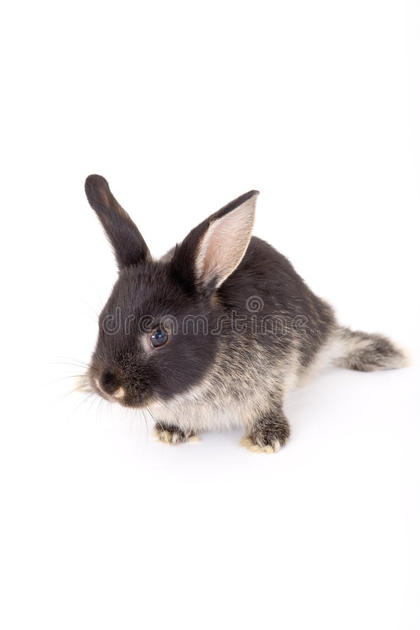 Free Black And White Bunny, Isolate Royalty Free Stock Image - 3190546