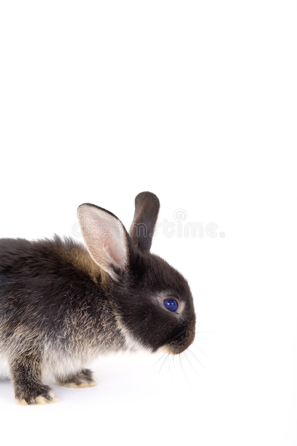 Free Black And White Bunny, Isolate Stock Image - 3190561