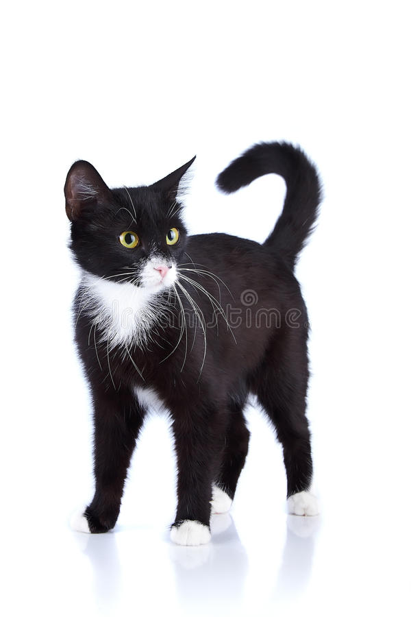 Free Black-and-white Cat. Stock Images - 29960834
