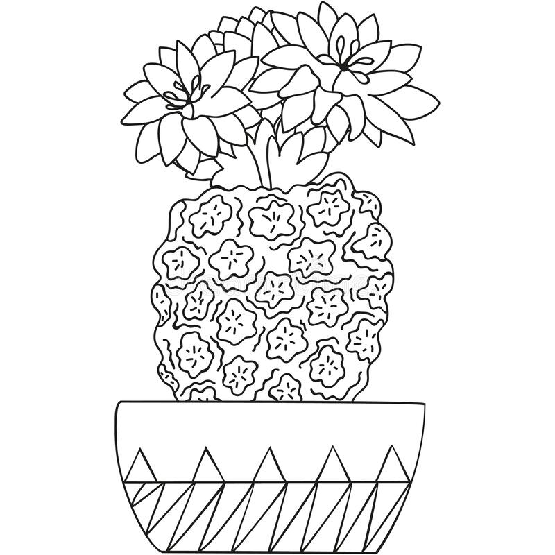 Free Black And White Flowering Turbinicarpus With Blossoming Flowers In A Pot. Cactus Isolated. Botanical Doodle For Coloring Book. Royalty Free Stock Photography - 187590727