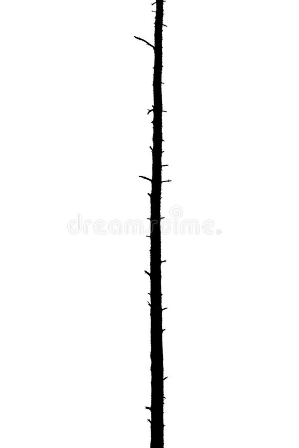 Free Black And White Silhouette Of A Lonely Single Pine Tree Royalty Free Stock Image - 112760836