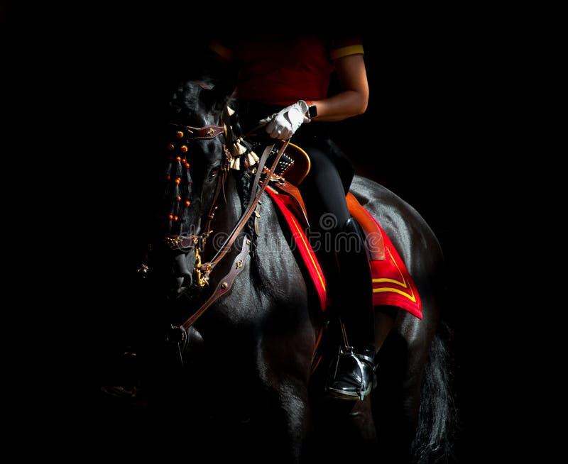 Black andalusian horse on dark background under the saddle stock images