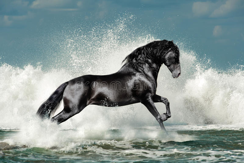 Black andalusian stallion and sea wave stock photos