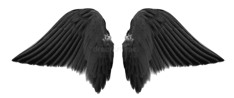 Black angel wings royalty free stock photo
