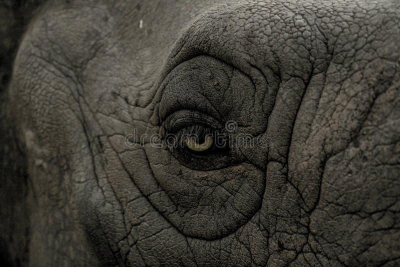Black Animal Eye Free Public Domain Cc0 Image