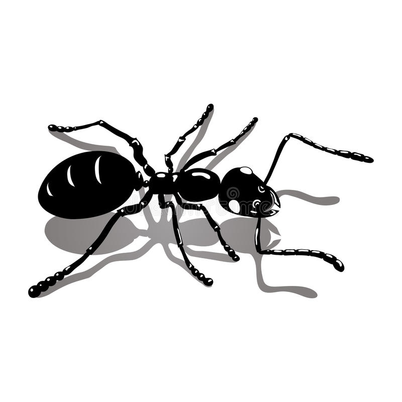 Black ant icon vector image royalty free stock images