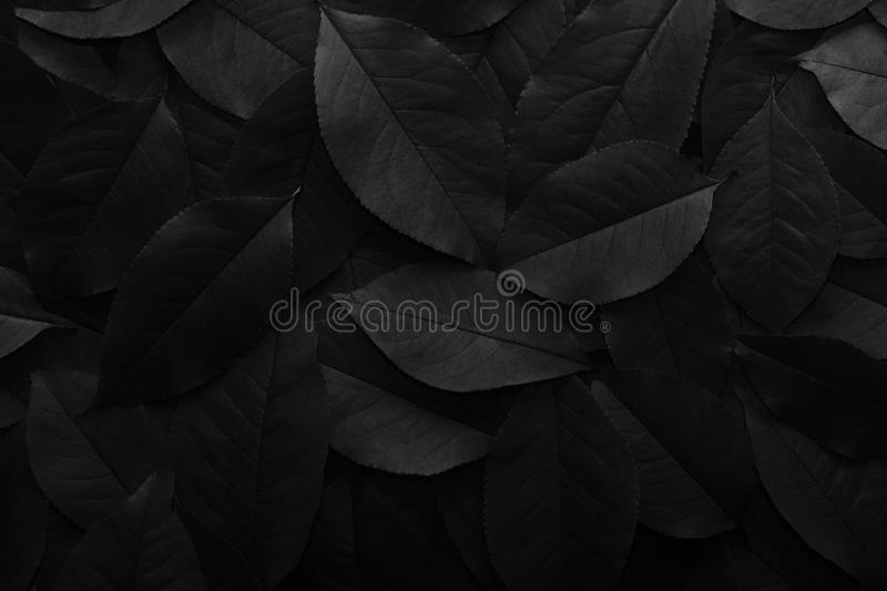 Black background. Background from autumn fallen leaves closeup. Black and white photo royalty free stock images