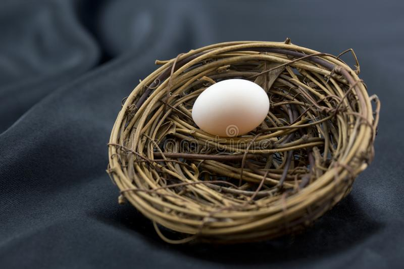 Black background highlights small nest egg as symbol of growth. Elegant sophistication of black background enhances small nest egg as wise symbol of ordinary royalty free stock photography