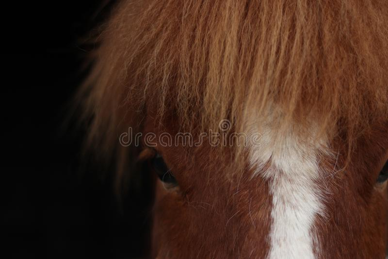 Black background horse white line eyes beautiful royalty free stock photo