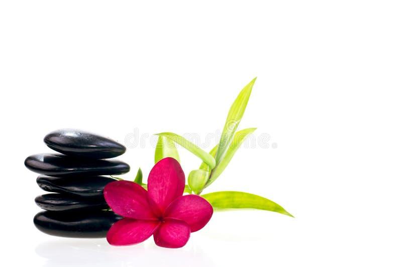 Black balanced zen stones with red plumeria flower stock images