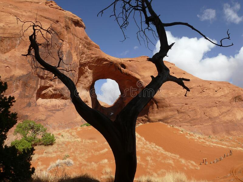 Black Bare Tree on the Brown Dessert Under Blue and White Sky stock images