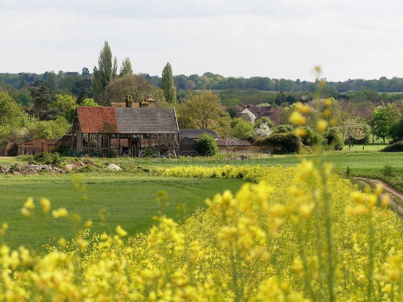 The Black Barn 16th Century, Woodoaks Farm, Maple Cross, Hertfordshire with foreground of blurred yellow flowering kale. This photo was taken in Rickmansworth royalty free stock image