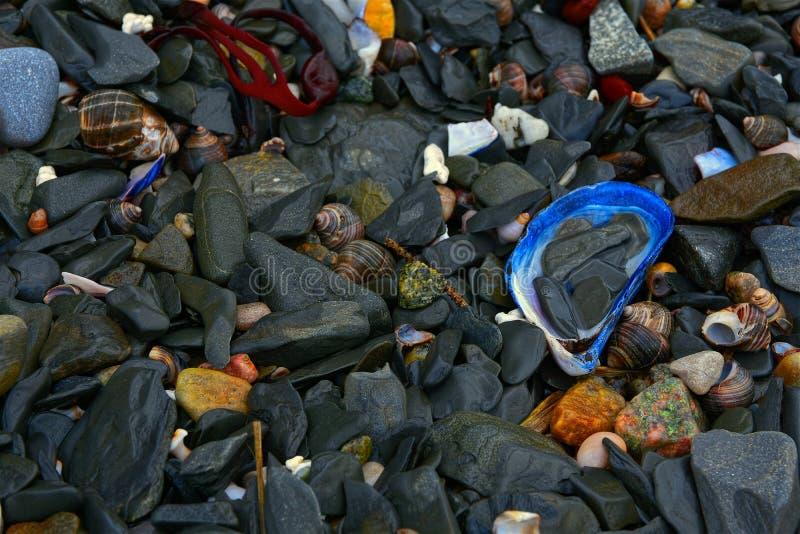 Black beach stones and seashells at Rocky Harbour, Gros Morne National Park, Newfoundland, Canada. Image of a random assortment of black slate stones, seashells royalty free stock images