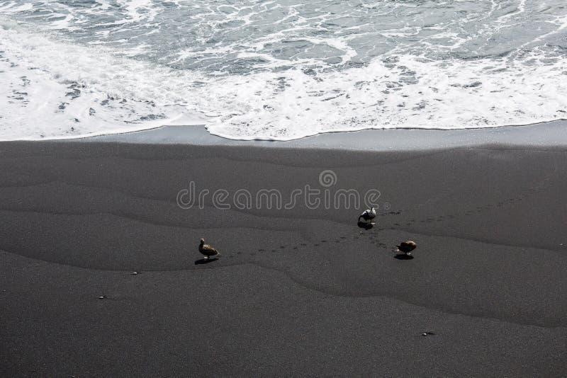 Black Beach, Vik, Iceland. The black sand beach of Reynisfjara in Iceland royalty free stock photo