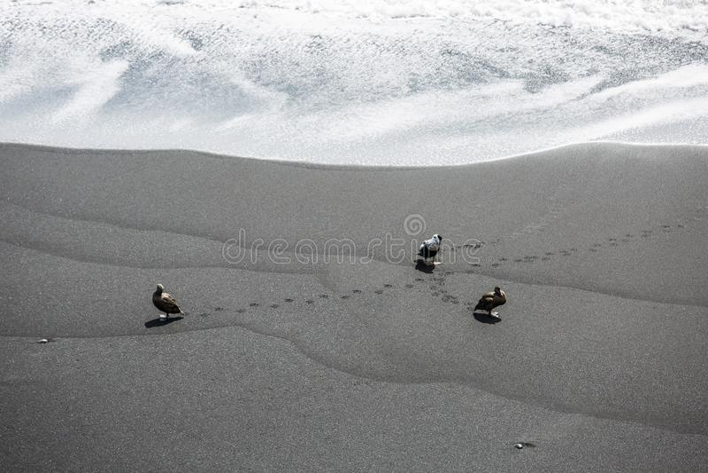 Black Beach, Vik, Iceland. The black sand beach of Reynisfjara in Iceland stock photo