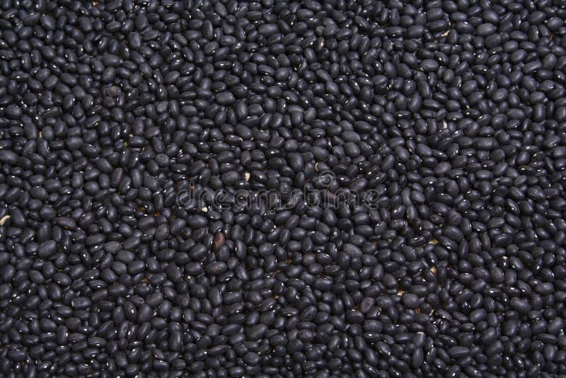 Black Beans royalty free stock image