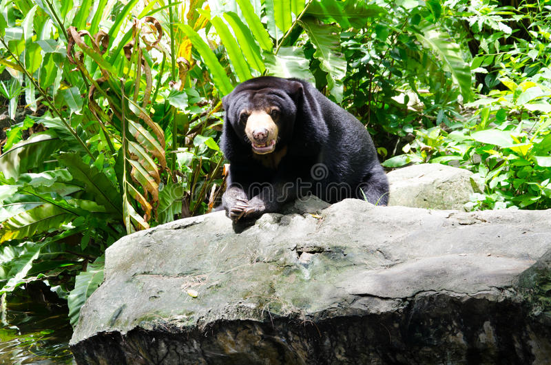 Download Black Bear Stock Photo - Image: 33445130