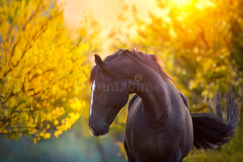Horse in fall stock images