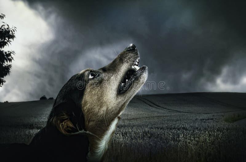 Black And Beige Short Coat Dog Head Photo Free Public Domain Cc0 Image