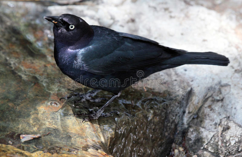 Black Bird stock photos